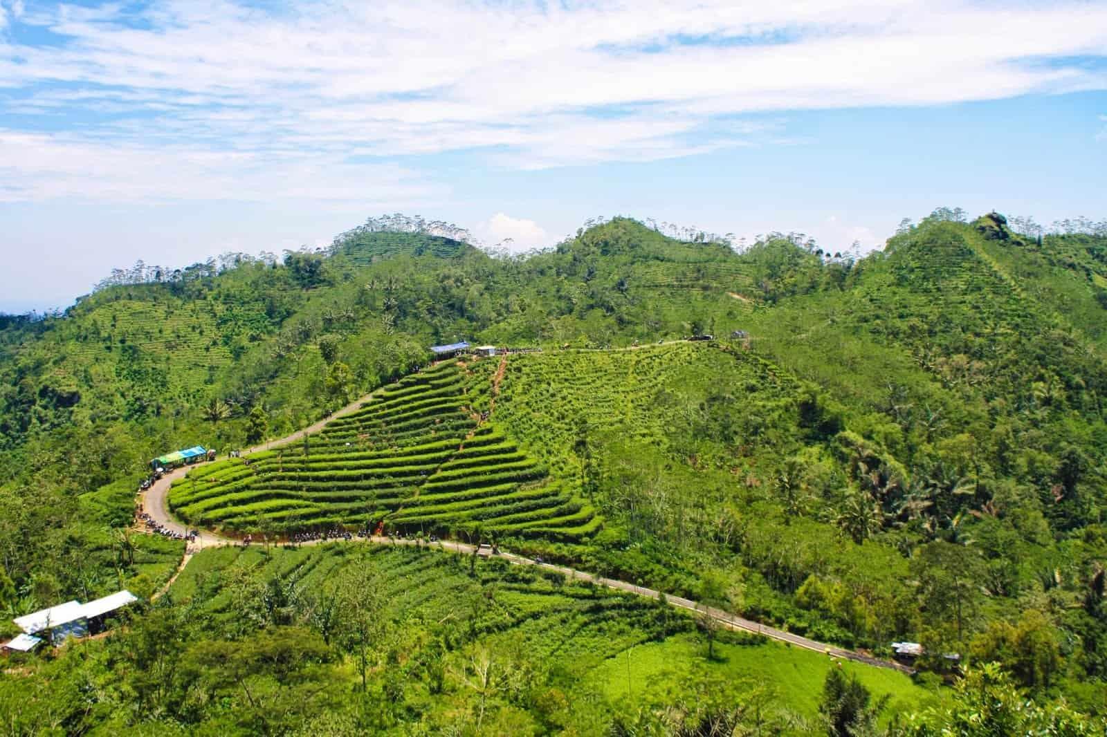 Desa Wisata Nglinggo