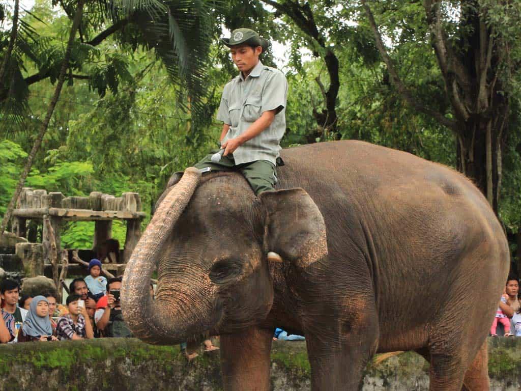 Atraksi Gajah Main Harmonika di Gembira Loka Zoo