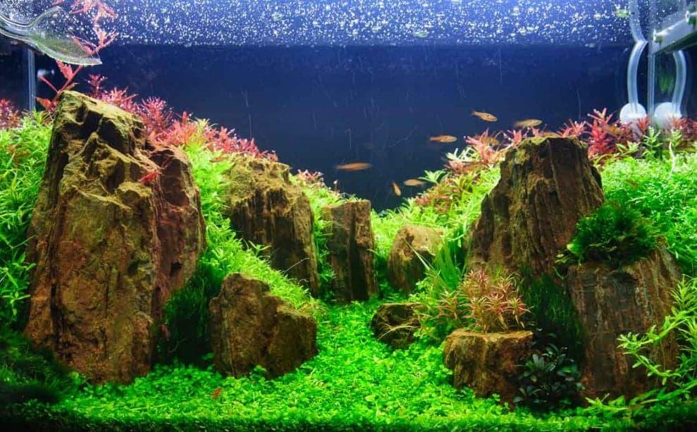 4 Rekomendasi Jasa Aquascape di Jogja