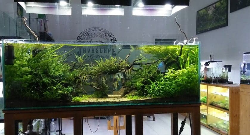 Javascape Aquarium (Aquascape Jogja)